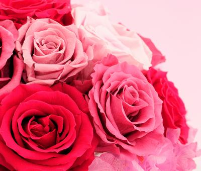 スキンケアは好きな香りで癒されながら♪おすすめはローズの化粧水のサムネイル画像