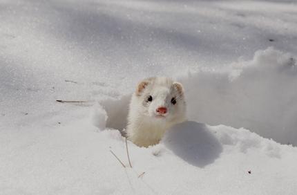 美白効果の期待できる美白美容液を美白効果成分別に紹介します!のサムネイル画像